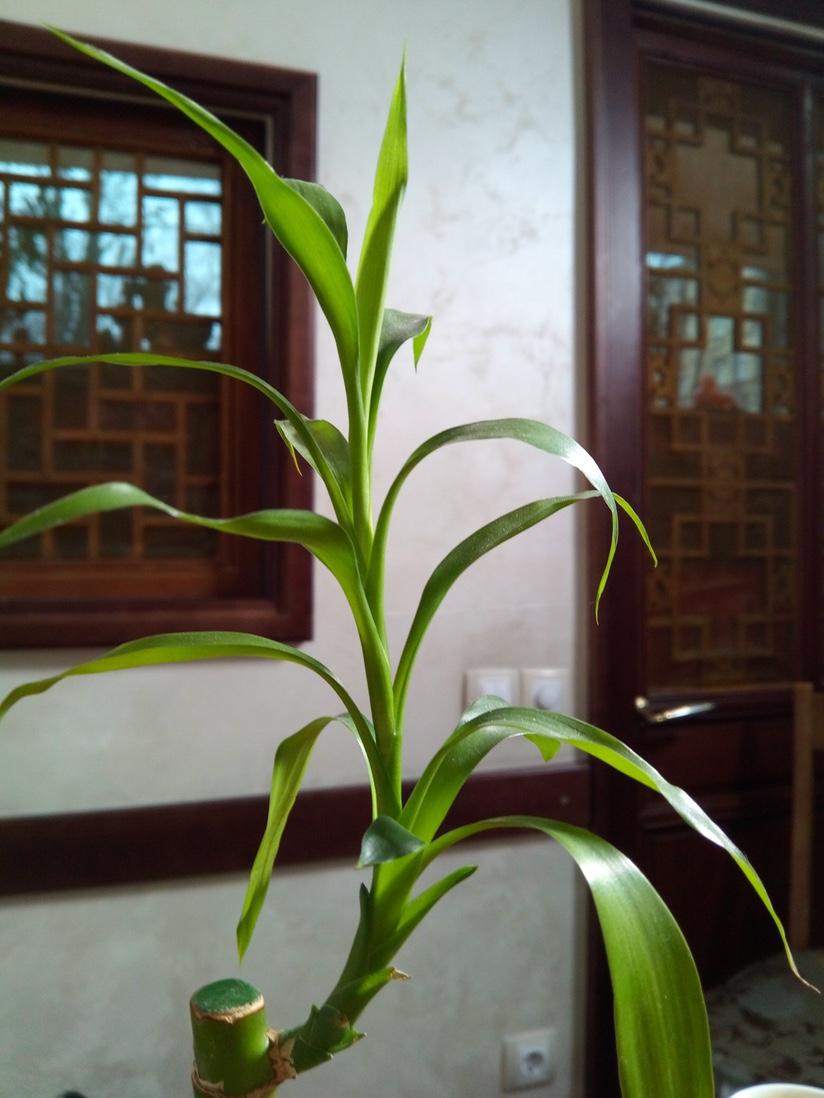 umi-plus-indoor-3